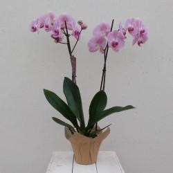 Orchideenpflanze